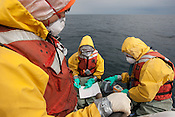 Crew from the Greenpeace ship Rainbow Warrior collect sea water samples to monitor radiation contamination levels, as the ship sails up the eastern coast of Japan, in the vicinity of Fukushima, in Japan, Tuesday 3rd May 2011..Collecting a sample of seaweed at coordinates 37' 01.084 North, 141' 30.304 East.