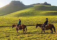 Visitors enjoy horseback riding over the mystical hills of Kohala, Hawai'i Island. This part of Kohala is in Waimea, near sunset.