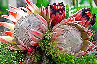 Protea flower arrangement, Maui