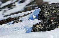 Winter ptarmigan,Norway