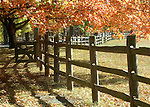 Orange and yellow autumn leaves with split rail fence on windy road Oatlands Plantation Commonwealth of Virginia, Fine Art Photography by Ron Bennett, Fine Art, Fine Art photography, Art Photography, Copyright RonBennettPhotography.com ©