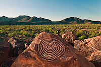 Spiral Petroglyph is on Signal Hill, Hohokam Art, Saguaro cactus,  Saguaro National Park, Arizona, USA (Carnegiea gigantea)