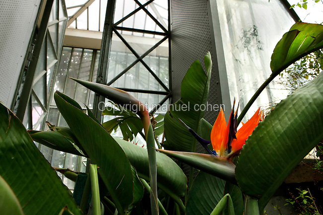 Plant History Glasshouse (formerly Australian Glasshouse), 1830s, Rohault de Fleury, Jardin des Plantes, Museum National d'Histoire Naturelle, Paris, France. Low angle view of Strelitzia reginae plants, from South Africa, in front of the decorative glass and metal door leading to the passageway to the Incubators.
