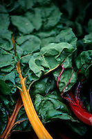 FOOD GROUPS: VEGETABLES<br /> Rainbow Chard<br /> Dark leafy greens, a a good source of Thiamin, Folate, Phosphorus and Zinc, and a very good source of Dietary Fiber, Vitamin A, Vitamin C, Vitamin E, Vitamin K, Riboflavin, Vitamin B6, Calcium, Iron, Magnesium, Potassium, Copper and Manganese