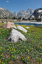 WY00621-00...WYOMING - Glacier lilys and Lake Solitude in Grand Teton National Park.