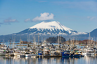 Bald Eagle soars above commercial fishing boats in New Thomsen harbor, Sitka, Alaska. Inactive volcano, Mount Edgecumbe on Kruzof Island in the distance.