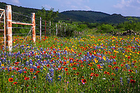 Texas Hill Country Bluebonnets and Wildflower Scenic Landscape Stock Photo Image Gallery