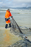 Trek-net fisher hauling in the net, Strandfontein beach, False Bay, Cape Town, Western Cape, South Africa