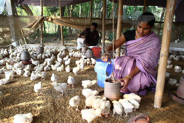 45 year old Amina Begum with the chickens she was able to buy with the help of a microfinance loan from IFAD (International Fund for Agricultural Development).