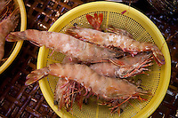 Shrimp in market, Hong Kong
