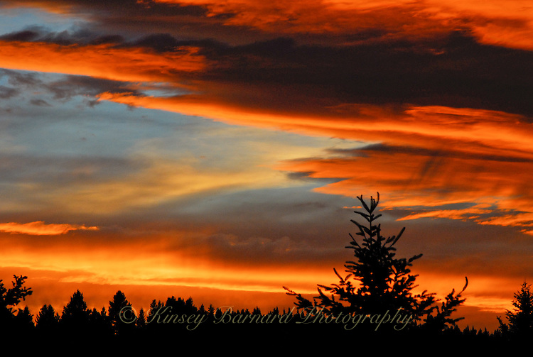 &quot;NOT SO SUBTLE SUNSET-2&quot;<br /> <br /> 40 x 30 USD 2,500<br /> 36 x 24 USD 2.000<br /> <br /> 16 x 12.5 Paper print. Signed &amp; numbered.<br /> 1/50 $95.00<br /> <br /> Spectacular Montana sunset. Orange an gold clouds against a blue sky with a silhouette of the Kootenai forest.