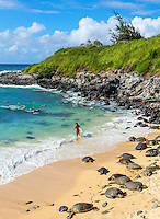 Hawaiian green sea turtles rest at Maui's Ho'okipa Beach while people enjoy the sea.
