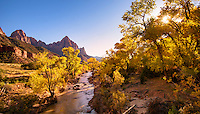 Zion Cottonwoods and Watchman
