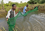 Russel Chirwa, left, and two others harvest fish from an artificial fish pond near Mvula, Malawi.
