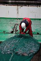 Deckhand untying bag of  pelagic fishing net on trawl deck. Barents sea, Arctic Norway