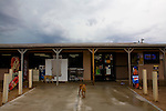 Stray dogs on Saturday, July 12, 2008 in Quijotoa, AZ.