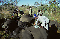In Kruger National Park in South Africa in 1996 while retracing Mark Twain's journey around the world. I was photographing an elephant relocation.
