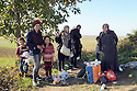 REFUGEES MAKE THEIR WAY TO THE CROATIAN BORDER CROSSING IN SERBIA NEAR THE VILLAGE OF BERKASOVO . EMIRA FROM ERMOK, SYRIA AND HER FAMILY. 24/10/2015. PHOTO BY CLARE KENDALL.