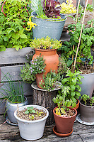 Flowers, herbs, vegetables and fruits growing in a container garden on an urban rooftop.