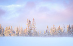 Idaho, North, Garwood. Morning light touches snow covered fire trees as mist rises from a winter meadow.