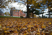 Fall leaves on the UVM Green, Fall UVM Campus