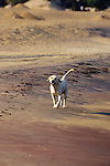 Dog On Beach At Livingstonia Hotel