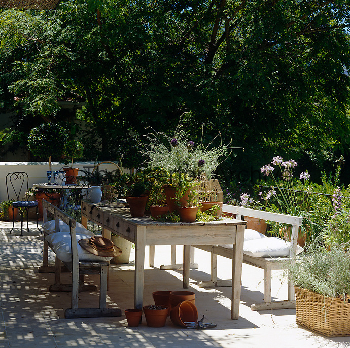 A scrubbed kitchen table flanked by a pair of sun-bleached wooden benches on the terrace is laden with pot plants