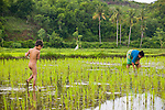 A young naked boy helps his mother plant rice in Lombok, Indonesia.