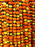Asia, India, Calcutta. Marigold garlands of the Calcutta Flower Market.