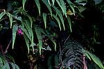 Ferns and flowers in the Peruvian Cloud Forest, Manu National Park, Peru, South America