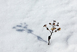 Foliage casts it shadow on a snowdrit at Schoodic Point on the Schoodic Peninsula in Acadia National Park, Maine, USA