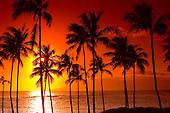 Sunset Palm Tree Silhouette
