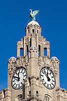 Liver Bird / Liver Building