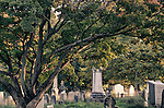 An old maple tree branches out in every direction over tombstones at the Albany Rural Cemetery