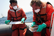 Daisuke Miyachi of Greenpeace Japan and Jakob Namminga of Greenpeace do a test of water and seaweed radiation contamination sampling equipment, on an inflatable from the Greenpeace ship Rainbow Warrior, as it sails to Fukushima in Japan, on Tuesday 26th April 2011.