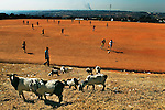Locals play a morning game of soccer on a dirt pitch in Alexandra Township watched by a goats in Johannesburg, South Africa, during the 2010 World Cup.