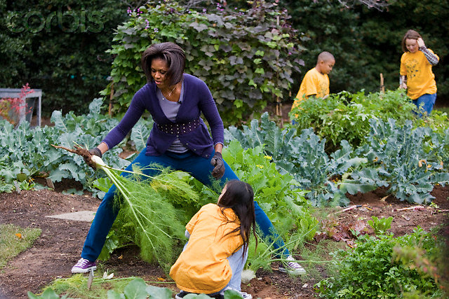 """29 Oct 2009, Washington, DC, USA --- """"First lady Michelle Obama harvests vegetables from the garden with children from Washington's Bancroft and Kimball Elementary schools, on the South Lawn of the White House in Washington                                          """" --- Image by © Brooks Kraft/Corbis"""