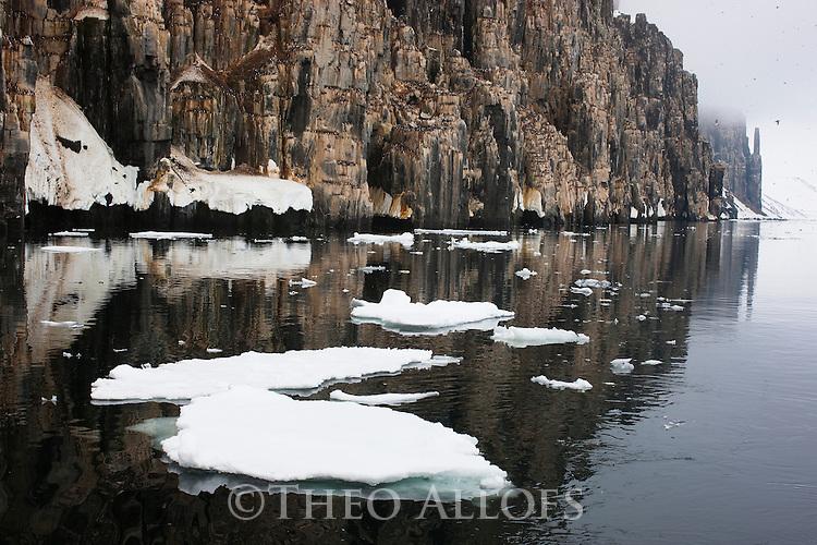 "Norway, Svalbard, Brünnich's guillemots (Uria lomvia) in large cliff ""Alkefjellet"" in Hinlopen Strait"