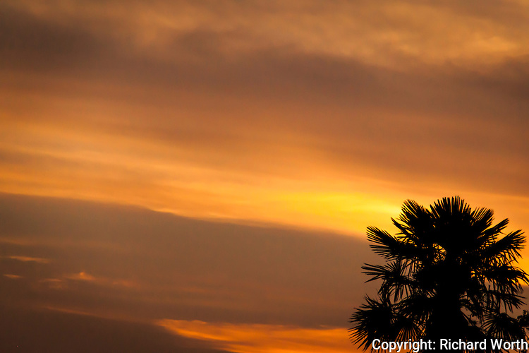 A palm tree silhouette against a glowing orange sky at sunset.