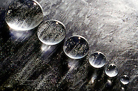 WATER DROPS ON A WAXED SURFACE<br /> Water's Strong Hydrogen Bonds Form Drops<br /> Water drops bead up on a waxed surface.