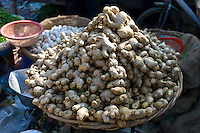 Old Delhi, Daryagang fruit and vegetable market with root ginger on sale, India