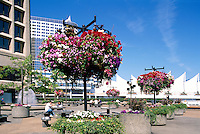 """Vancouver, BC, British Columbia, Canada - Hanging Flower Baskets at """"Granville Square"""", overlooking """"Canada Place"""" Trade and Convention Centre, Summer"""