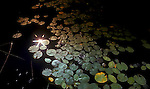 Sunburst reflection on water with lily pads