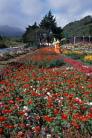 Flower garden with miniature Dutch windmill in the mountain town of Boquete, Panama
