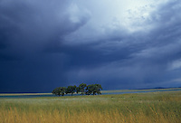 storm in New Mexico over a field with trees and a lake