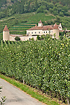 Castle Goldrain, 11th century castle surrounded by apple orchards in the town of Coldrano in South Tyrol, Italy; the castle is now a cultural institute