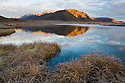 Mountains reflection in small lake at sunrise, northern Yukon; grass and bushes covered with hoar frost; Canada