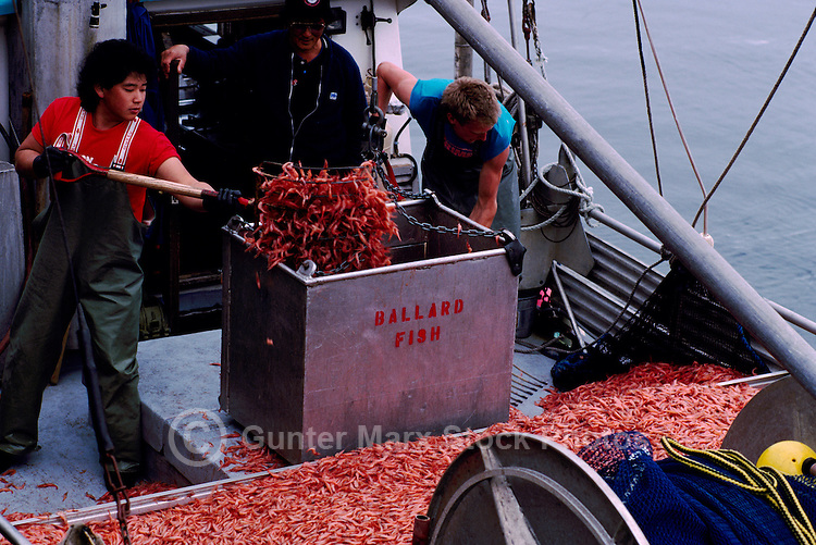 Tofino vancouver island shrimp fishing bc pictures images for Washington dc fishing license