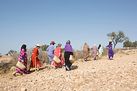 Morocco - Tidzi - Members from the Ajddigue cooperative walk amidst the Argan forest. The argan forest covers around 800,000 hectares in South-West Morocco, in an area located between the cities of Essaouira, Agadir and Taroudant. The argan tree can live up to 200 years and it's perfectly adaptable to the arid climate of the region.