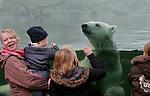 Foto: VidiPhoto..RHENEN - Topdrukte bij de ijsberen in Ouwehands Dierenpark dinsdag. Massaal reizen bezoekers uit het hele land tijdens de Kerstvakantie af naar de Rhenense dierentuin om een glimp op te kunnen vangen van de pasgeboren ijsbeertweeling. Die zijn echter alleen via een webcam op een scherm in het park te zien. Daarom is het nu extra druk bij de neefjes en nichtjes van de tweeling die zich vermaken aan het glas van het ijsberenverblijf. IJsberen voelen zich in hun element nu het zo koud is.